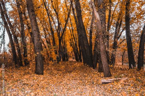mata magnetyczna Golden autumn