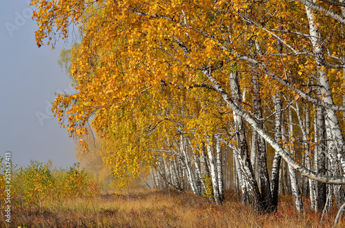 obraz lub plakat In autumn forest. In September, the first frosts begin in the Urals. In the morning frost appears on the grass and leaves. And in the afternoon in Sunny weather it is warm as in summer.
