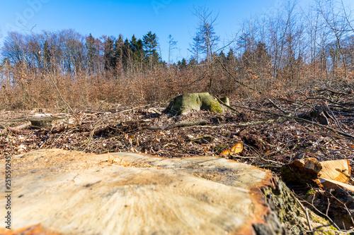 Klettergurt Für Baumfällarbeiten : Plakat forstwirtschaft str 1