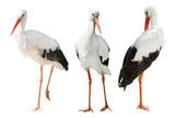 three storks isolated on white