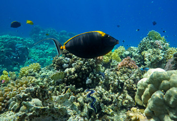 tropical fish in coral reef