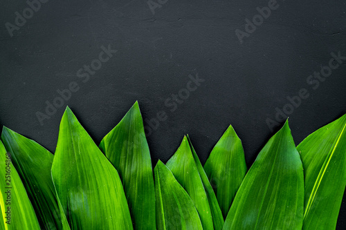 Bright spring green leaves on black background top view copy space border - 251604868