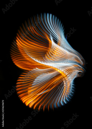 Multicolored twisted ordered parallel lines on a black background. Light in motion. Color abstraction. - 251624670