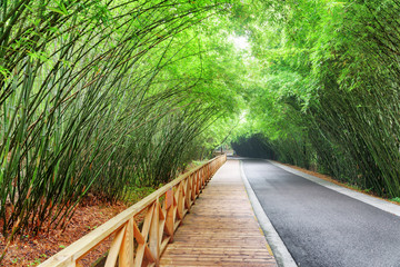Scenic road and wooden walkway among green bamboo trees © efired
