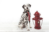Dalmatian dog in a striped tie sitting by red hydrant on white background