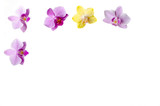 White background framed with purple and yellow orchid flowers