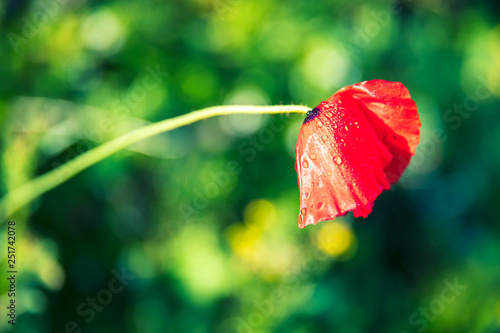 red flower on green background - 251742078