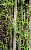 Bamboo leaf close up shot
