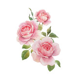 Watercolor rose vector omposition - 251804048
