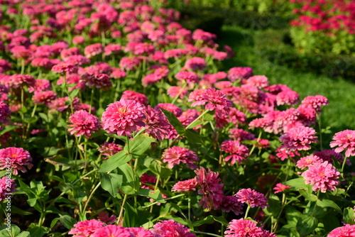 Spring Formal Garden. Beautiful garden of colorful flowers.Landscaped Formal Garden. Park. Beautiful Garden - 251836429