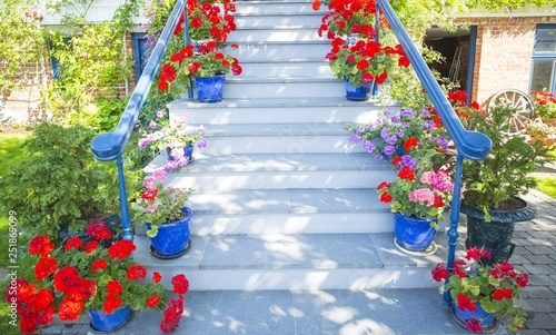 Garden flowers near by the white stairs