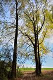 arbres et forets 2