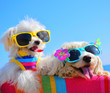 Leinwandbild Motiv happy dogs with sunglasses