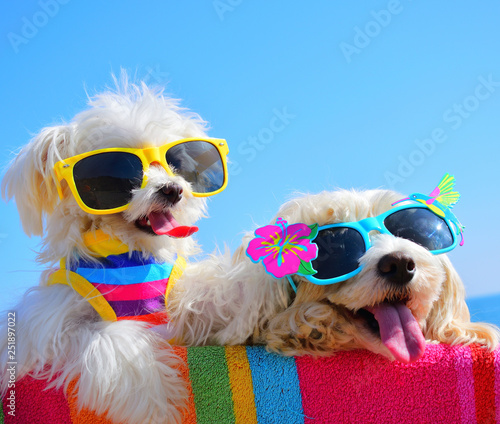Leinwanddruck Bild happy dogs with sunglasses