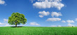 Leinwandbild Motiv Idyll, panoramic landscape, lonely tree among green fields