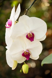 a beautiful white orchid