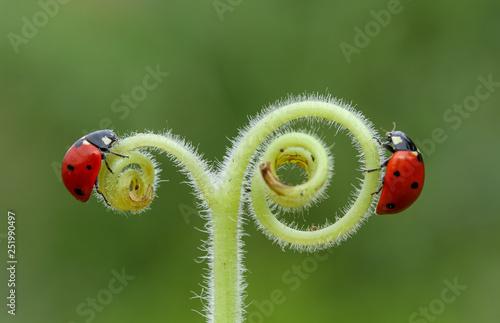ladybug on leaf © mehmetkrc