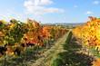 wineyard near retz, weinviertel, lower austria
