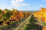 Fototapeta Natura - wineyard near retz, weinviertel, lower austria © Wolfgang