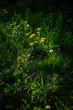 Green summer grass and flowers