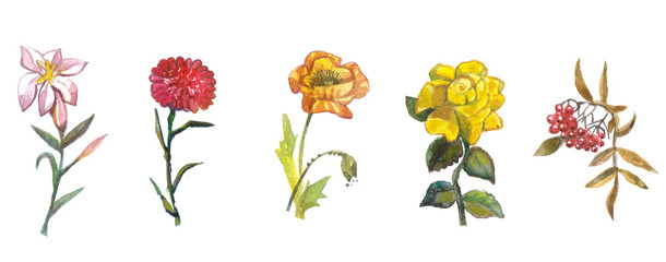 Hand painted floral elements set. Watercolor botanical illustration-Natural objects isolated on white background © Виктор Сухочев