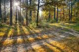 Fototapeta Forest - Poranek w jesinnym lesie i promienie słońca w koronach drzew © Dorota