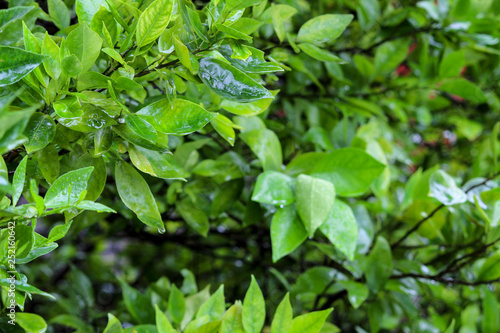 mata magnetyczna background of green leaves