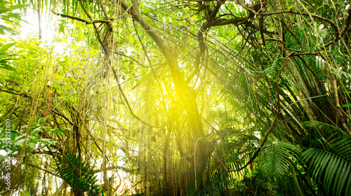 Leinwanddruck Bild Rainforest in Southeast Asia, Thailand. Sun glare. Lush jungle. Exotic leaves.