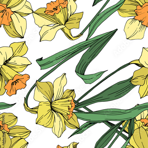 Vector Yellow Narcissus floral botanical flower. Engraved ink art. Seamless background pattern. - 252219042