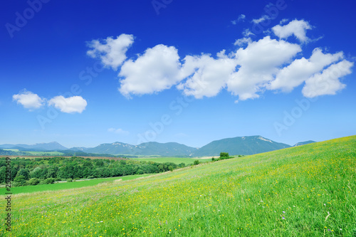 obraz PCV View of the green fields and blue sky