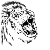 Beautiful leo with open mouth and fangs. Wild animal, predator. Vector illustration for greeting card or poster, print on clothes. Hand drawing. Lion.