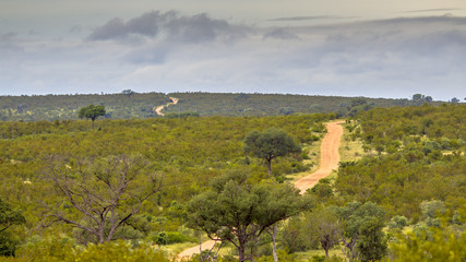 Dirt road through hilly savanna