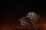 Fototapeta Space - Rozgwieżdżone Niebo I Drzewo © jesiotr9