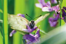 "Постер, картина, фотообои ""white butterfly close up on lilac flowers"""