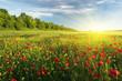 Leinwandbild Motiv Spring flowers in meadow.