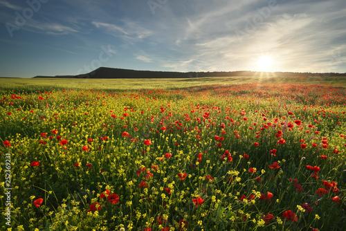 Spring flowers in meadow. - 252369231
