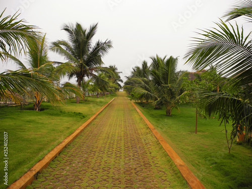 Path in a green park of coconut trees, India, Tamil nadu   Buy