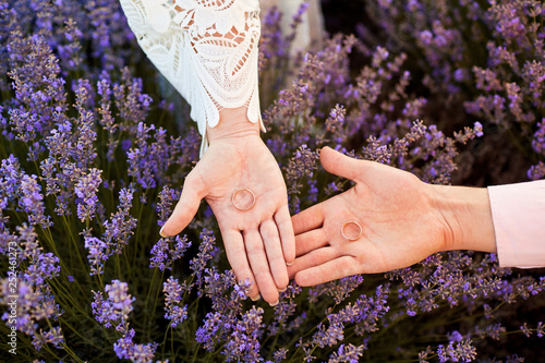 Wedding rings on hands in the field of lavender. - 252461273