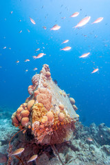 Small underwater wreck woth coral