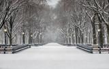 Fototapeta Nowy Jork - Central Park, New York City in winter © John Anderson