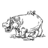 Hippo with open mouth and birds sitting on the back. Sketch. Engraving style. Vector illustration.
