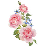 Watercolor rose vector omposition - 252476020