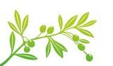 olive0203b