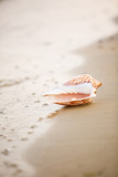 sea shell on the beach. Decorative composition in marine style. Sea vacation