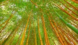 Wide angle vbrant view of bamboo in Sochi