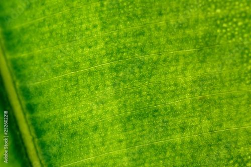 obraz PCV macro photo of green leaf