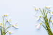 Fresh snowdrops on blue background with place for text. Spring greeting card. Mother day. Flat lay.
