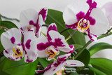flowers orchids