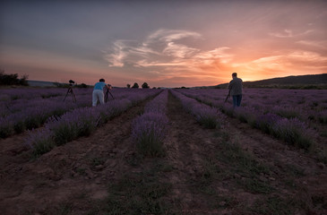 Photographers shooting landscapes at sunset on a lavender field. Summer sunset landscape in Bulgaria