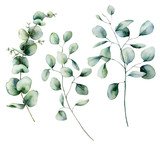 Watercolor eucalyptus set. Hand painted baby, seeded and silver dollar eucalyptus branch isolated on white background. Floral illustration for design, print, fabric or background. - 252647481